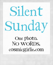 wpid-silent-sunday.jpg