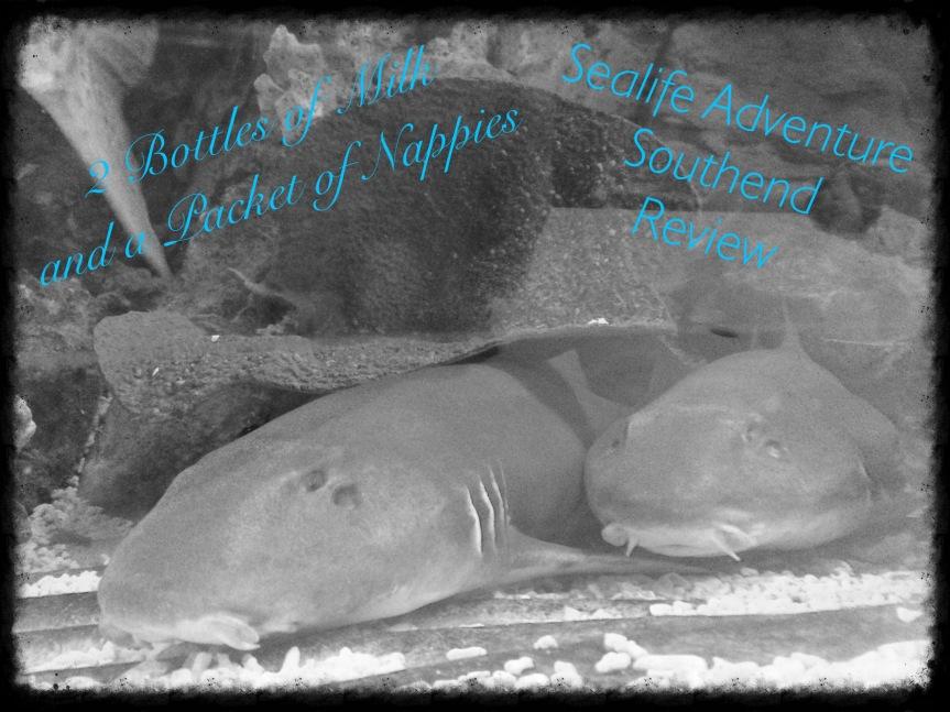 Sealife Adventure Southend onSea