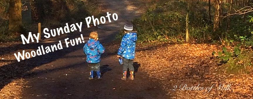 Sunday Photo 17:01 Woodland Fun