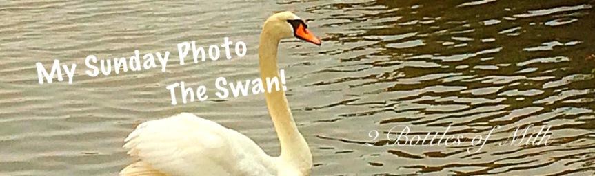 My Sunday Photo 17:12; The Swan!