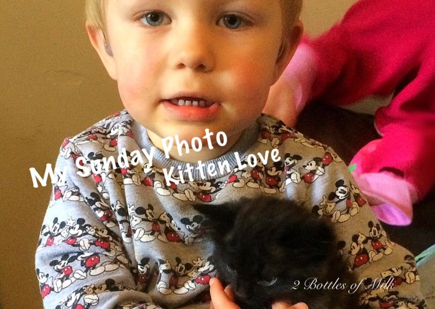 My Sunday Photo 17:13; KittenLove